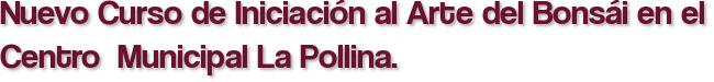 Nuevo Curso de Iniciación al Arte del Bonsái en el Centro  Municipal La Pollina.